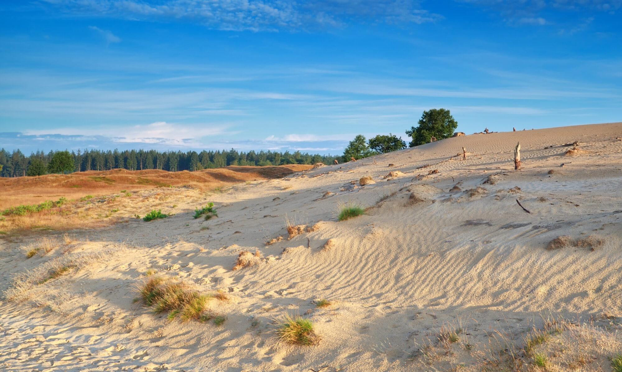 Vakantie in Nationaal Park Drents-Friese Wold